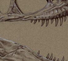 Albertosaurus Skull Sticker