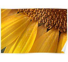 sunny pollen Poster