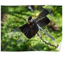 Libélula - Dragonfly Poster