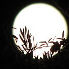 silhouette against an almost full moon... by kangarookid