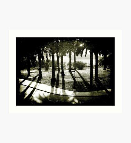 Palm Bosque at Dusk Art Print