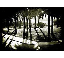 Palm Bosque at Dusk Photographic Print