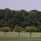 Treeo by Michael Degenhardt