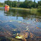Frog in Algonquin Provincial Park, Ontario, Canada by Mooke