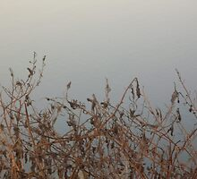Waters Edge by CliffordV
