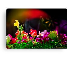 Flash - of Color! Canvas Print