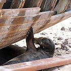 sea lion at work by Anne Scantlebury
