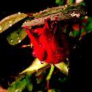 Tears of the rose... by Paul Rees-Jones