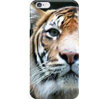 Wild Tigris iPhone Case/Skin