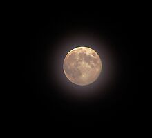 Blue Moon by Nevermind the Camera Photography