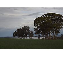 Crops on the lake Photographic Print
