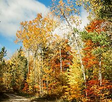 North Country Trail Head by Theodore Black