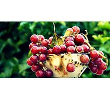 Sour  Grapes  Photographic Print