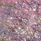 Dreamy Spring afternoon. by Becca7