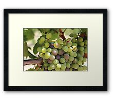 Winery Grapes Framed Print