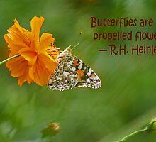 Butterfly card by Eileen McVey