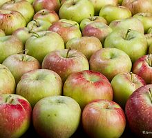 Apple Bunch by Bo Insogna