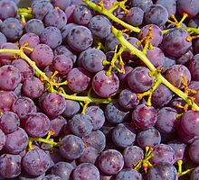Italian Red Grapes Bunch   by Bo Insogna
