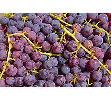 Italian Red Grapes Bunch   Photographic Print