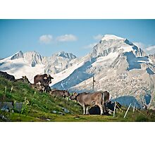 Grazing on top of the world Photographic Print