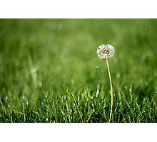 Lonely dandelion Photographic Print