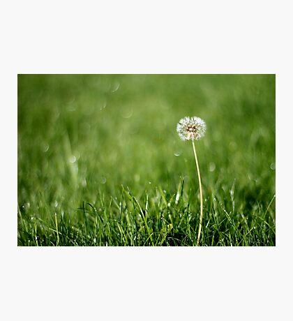 Lonely dandelion Photographic Print