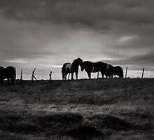 some horses by JorunnSjofn Gudlaugsdottir
