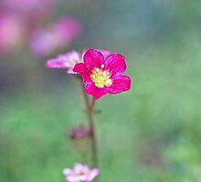 Untitled by gardenessence