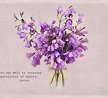 Jacaranda Flowers by photecstasy