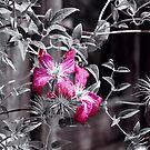 Beauty Abandoned~ by Brenda Dahl