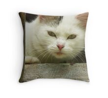 Cats and kittens Throw Pillow