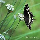 Butterfly and Bug on Chive Blooms by DottieDees