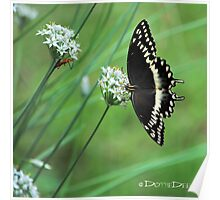 Butterfly and Bug on Chive Blooms Poster