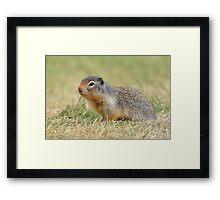 Ground Squirrel Framed Print