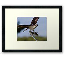 Showing Off Framed Print
