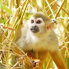 Squirrel Monkey by photecstasy