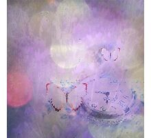 Lavender Dream Photographic Print