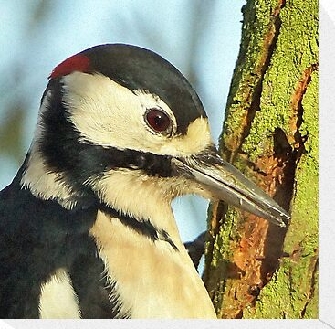 Great Spotted Woodpecker by MikeSquires