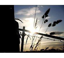 Sun Kissed Grass Photographic Print
