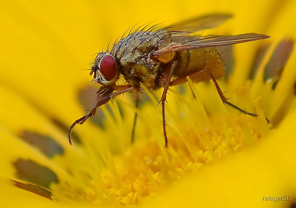 Fly on Flower by relayer51