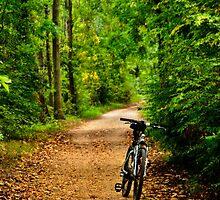The Bike on the Towpath by Debra Fedchin