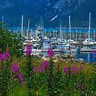 Haines Small Boat Harbour through the Fireweed by Yukondick