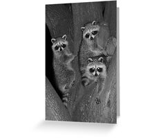 Three Baby Raccoons Greeting Card