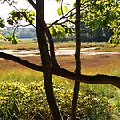 Salt Marsh View by Linda  Makiej