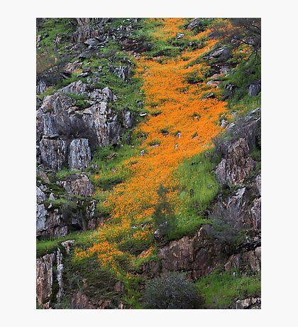 Poppy Hills Photographic Print
