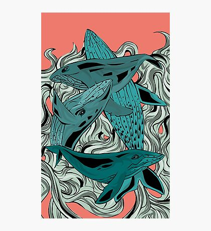 Whales Photographic Print