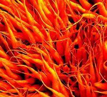 Carrots by Barnbk02