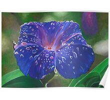 Deep Purple Morning Glory With Morning Dew Poster