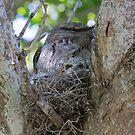 Peeping Out by byronbackyard