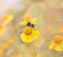 Helenium And Little Bee by Shelly Harris